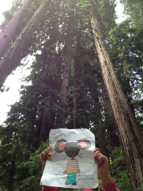 Mimi and George loved spending the morning in Muir Woods. George felt very small next to the giant redwoods!
