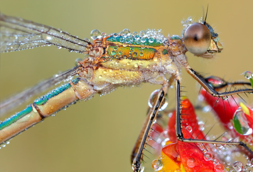 Absolutely stunning picture of a dragonfly in all its glorious detail