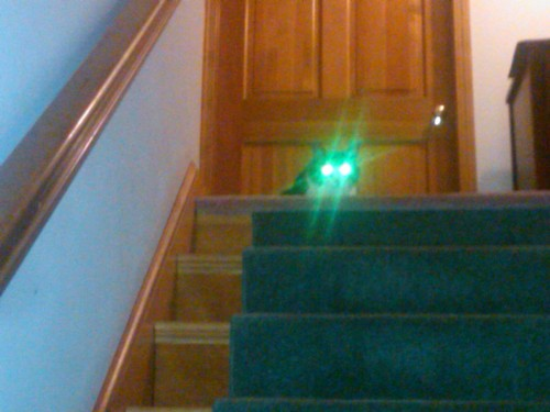 shut off your high beams, cat. you're blinding me.