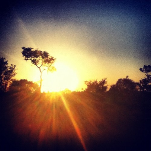 Sooo pretty! #africa #sunset #safari #travel  (Taken with Instagram)