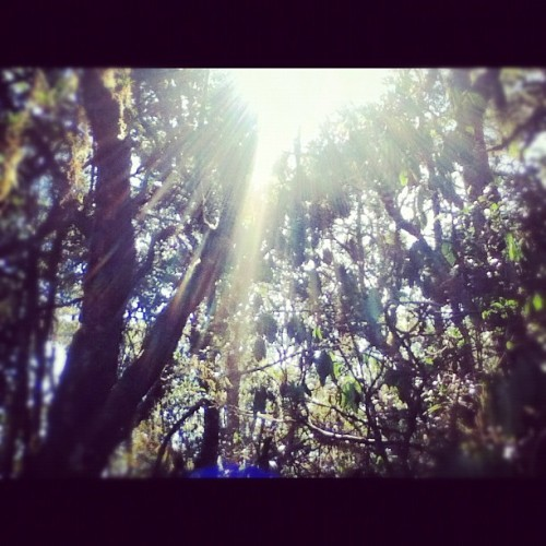 Rainforest! #africa #travel #safari #rainforest (Taken with Instagram)