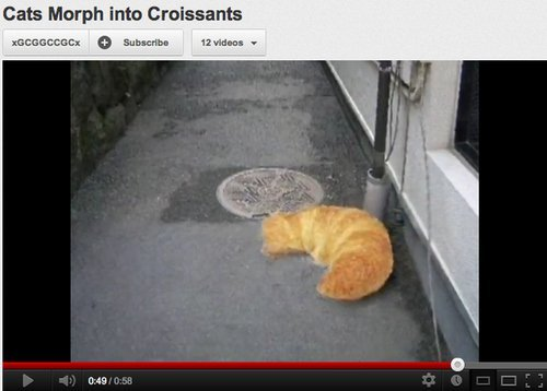 Cats are Croissants