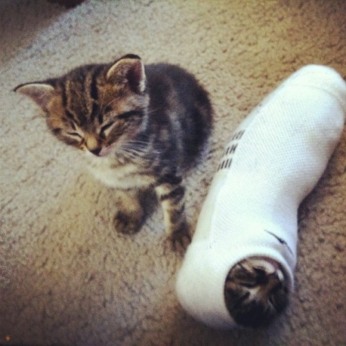 cuteoverdose:  My bestie is fostering kitties and likes to put them in socks.more cute here