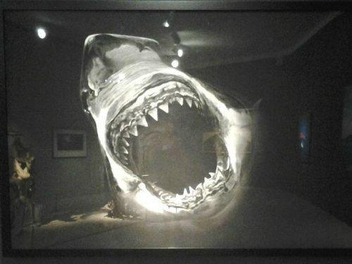 "hyperallergic:  Robert Longo, ""Untitled (large black shark portrait)"" (2008), charcoal on paper (via Hunters or Hunted? Reckoning with Sharks)"