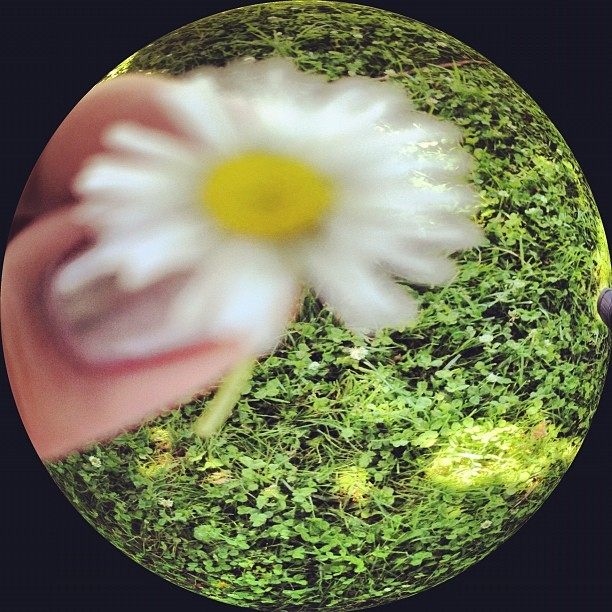#flower #grass #weeds #fisheye #blurry #outdoor (Taken with Instagram)
