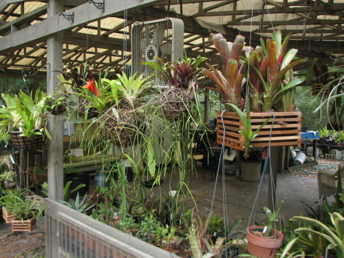 This is just a few quick photos from inside and around the greenhouse.