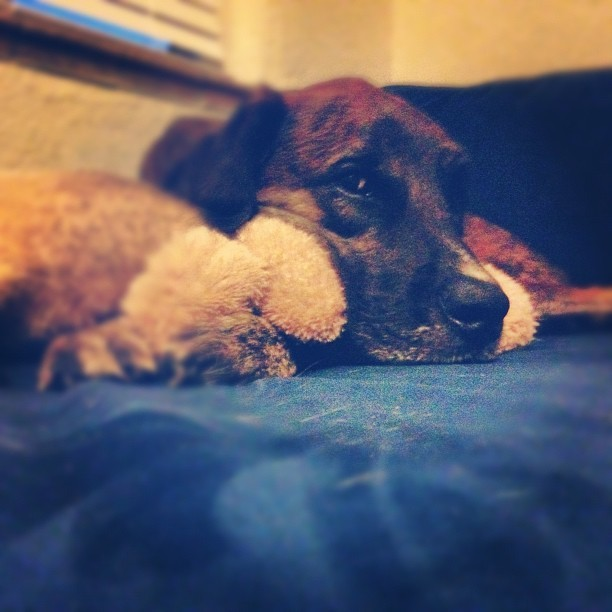 He likes to sleep with his baby (Taken with Instagram)