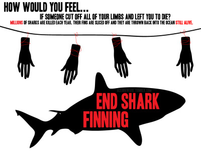 oceanaware:  End shark finning.