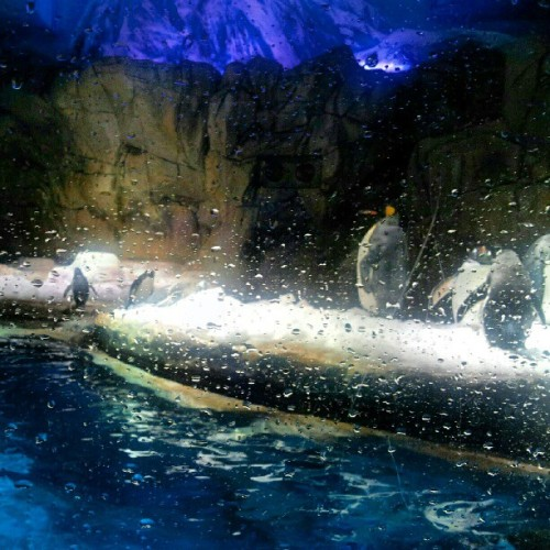 #Penguins #OceanPark #HongKong  (Taken with Instagram)