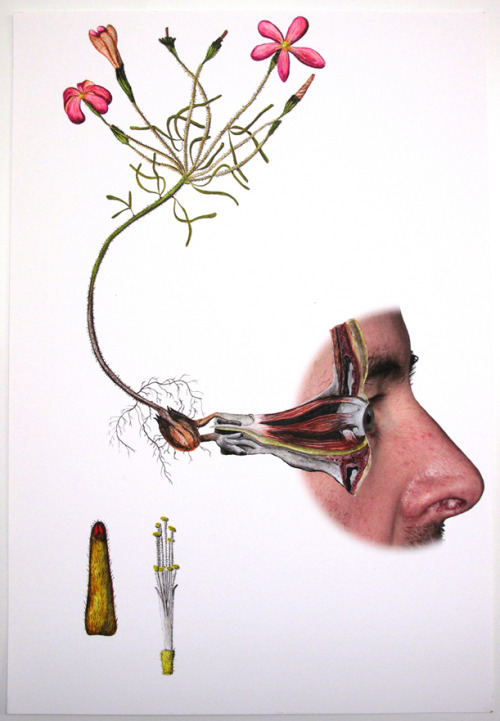 fuckyeahmedicaldiagrams:  Part of the L'herbier series by Laurent Millet. Digital print/painting, 30x42cm, 2011.