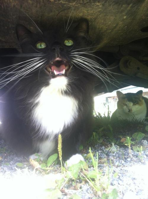 Beware: Sinister Cats Lurk Under Car