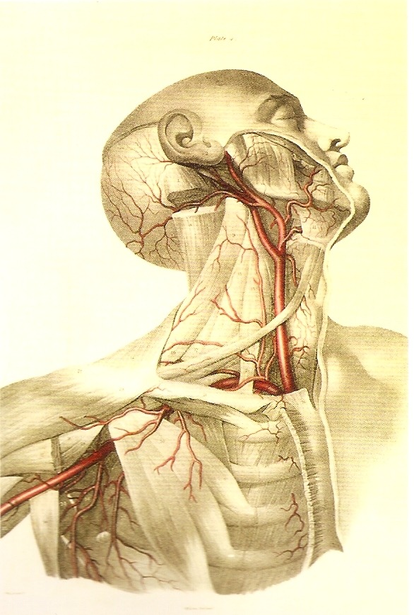 salmonellaplace:  Arteries of the neck and shoulder, by Fairland in the Vessels of the Human Body (1837), based on the drawings of J. Swandale. © Sheila Terry/ Science Photo Library / Focus