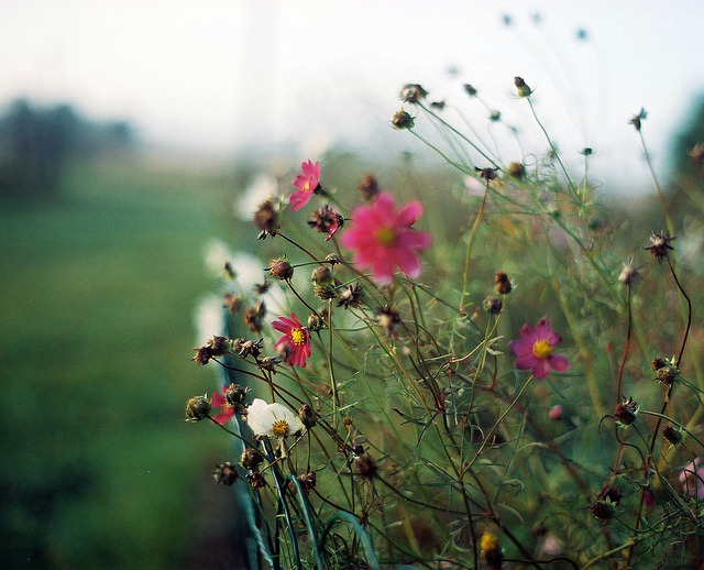 collectsomestars:  untitled by e.kristina on Flickr.