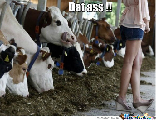 Dat Ass Cow