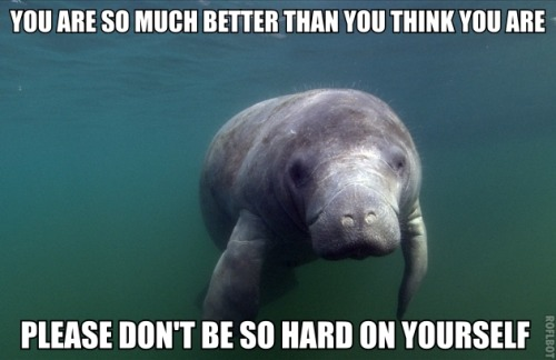 "calmingmanatee:  [Image Description: A photo of a dark grey manatee facing the camera. The sea is dark green around it. TEXT: ""You are so much better than you think you are. Please don't be so hard on yourself.""]"
