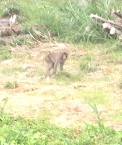 Saw monkeys while in Japan!!!!!