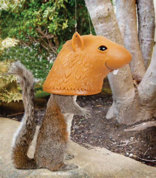 Big Head Squirrel Feeder, when you want squirrels to entertain you for their dinner If you get a Big Head Squirrel Feeder, you'll be able to feed and humiliate squirrels at the same time. Hang this vinyl 5-1/2″ x 8″ Big Head Squirrel Feeder in front of a window or near a porch, fill it with something squirrels like to eat and when they stick their head up there, the squirrel looks like he has a hilariously huge head with a goofy smile. Keep a camera nearby, you'll want to post a picture on Facebook. Perfect for birdwatchers, dads or anyone else who thinks squirrels should be taken down a peg or two. Has holes in the ears for hanging with string (not included). From Archie McPhee