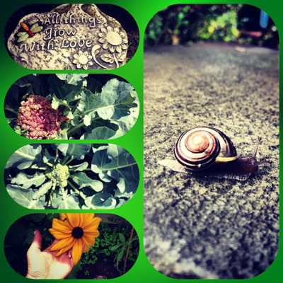 I love my #Garden. #snail #flowers #broccoli #cauliflower #organic #plants #producE #enchanted #magical #peaceful #quiet #calm #homegrown #allthingsgrowwithlove #love  (Taken with Instagram)