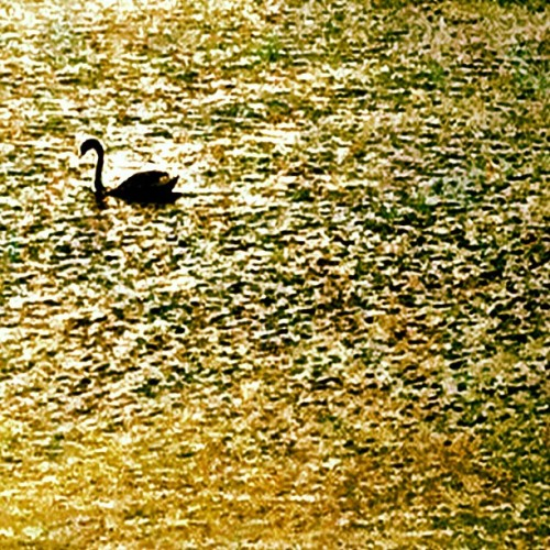 ugly duckling grew up. #MVY (Taken with Instagram)