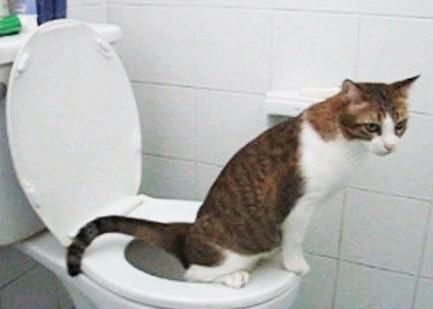 cat will not eat