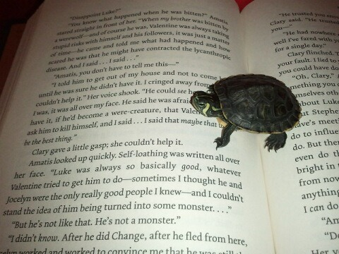 turtlefeed:  gigglemeharder:  He likes to get close to his books.  It's good to start them reading when they're young.