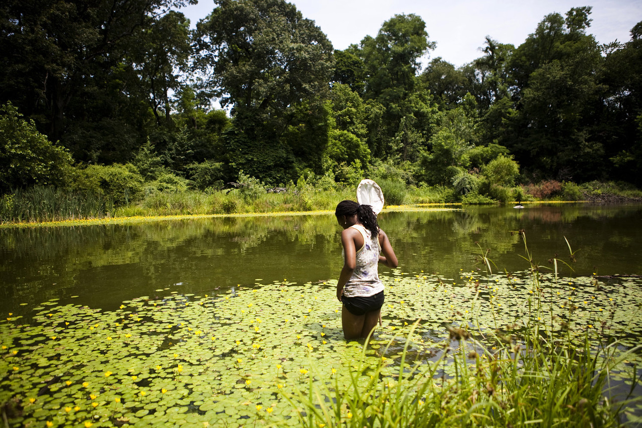 Asia hunting dragonflies, Queens, NY. July, 2012. © Natalie Keyssar for The Wall Street Journal