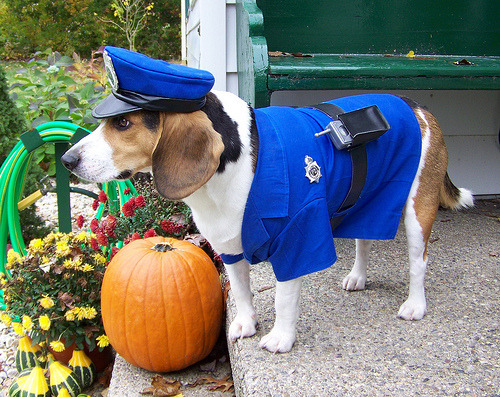 theclearlydope:  Dogs just use Halloween as an excuse to dress like sluts.  bunnyfood:  (via)