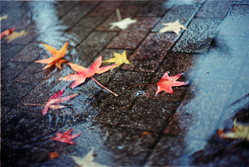 vituperat:  a sentimental season by breeze.kaze on Flickr.
