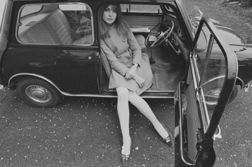 rosettes:  Jean Shrimpton by Duffy
