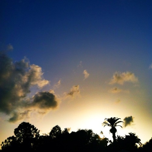 #sunset #sun #sky #skystagram #palmtree #tampabay #clouds #iphone #iphonesia #iphoneonly #ikonic  (Taken with Instagram at Park Place & Gulf To Bay)