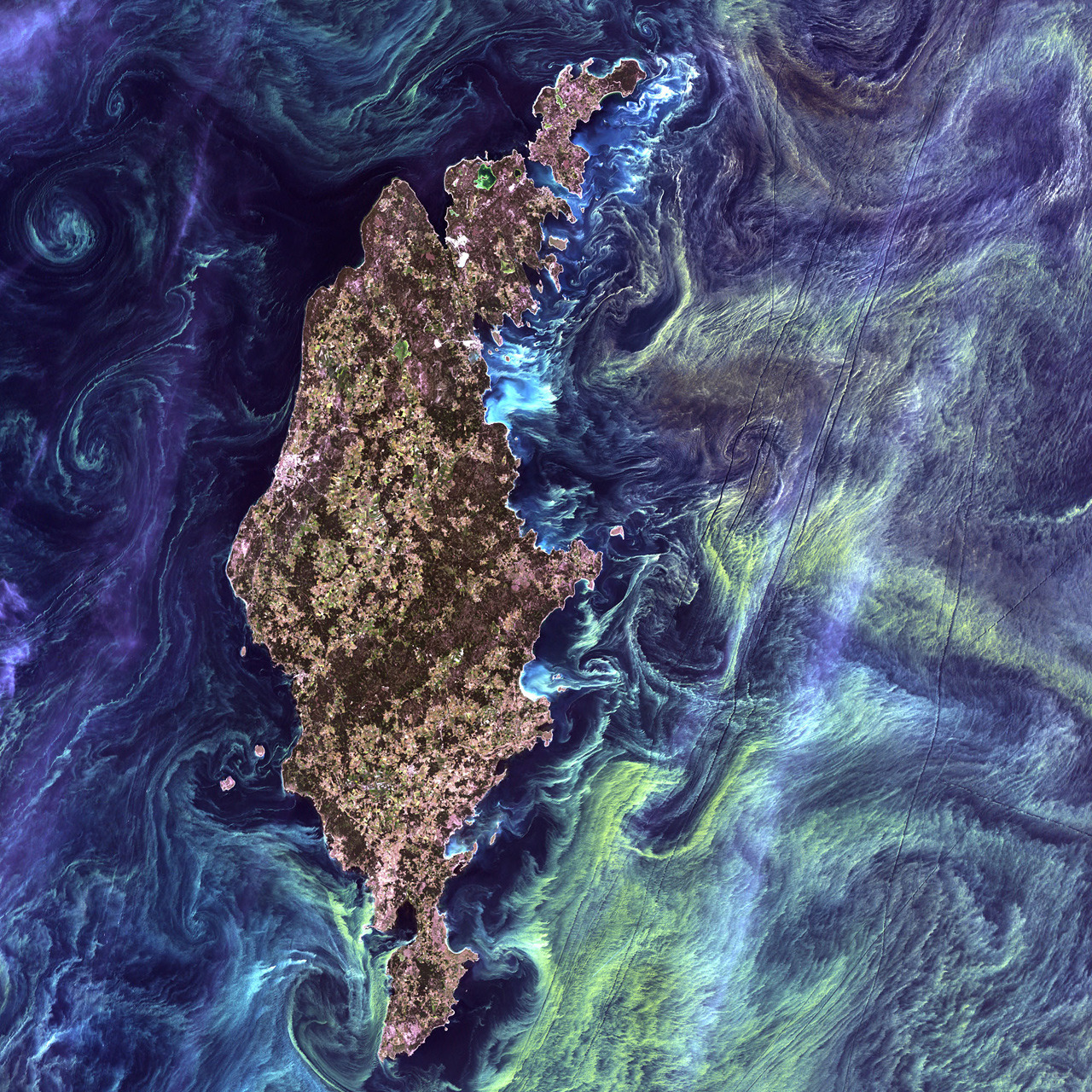 "ckck:  Gotland, Sweden, surrounded by plankton. July 13th, 2005. This Landsat 7 photo recently won NASA's ""Earth As Art"" contest."