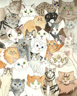 eatsleepdraw:  I love cats.