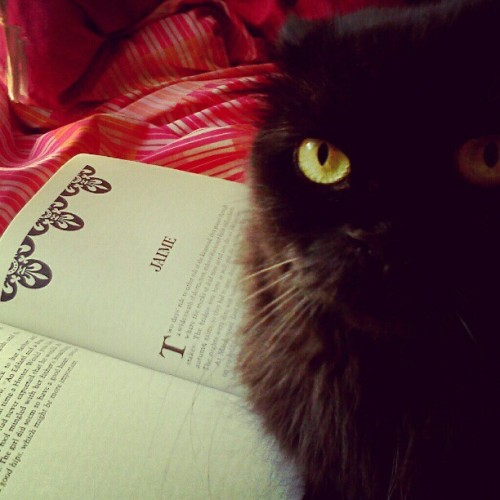 Cats make reading difficult (Taken with Instagram)