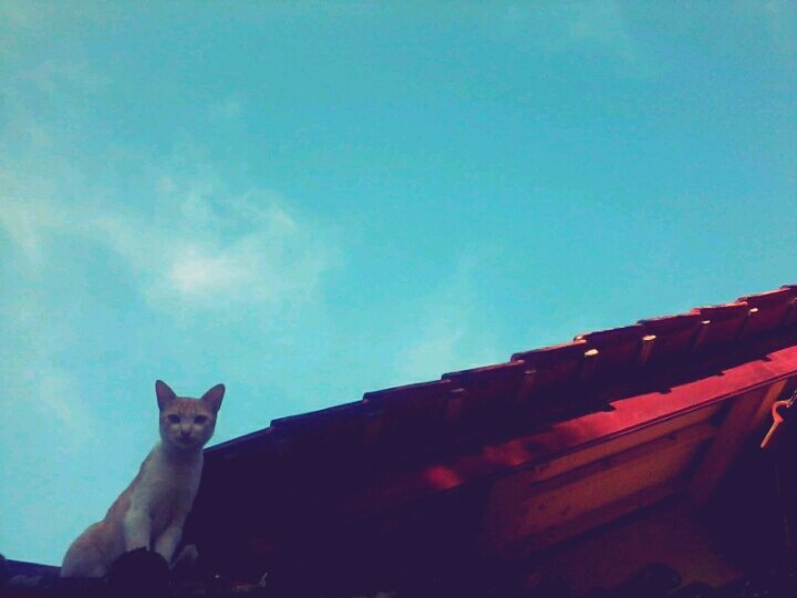 myhauntedvisions:  Woooo my cat on rooftop agaiiiin 😜#sky #blue #cat #rooftop #up #photographer #photooftheday #funny #morning #nimong(from @hanadodots on Streamzoo)