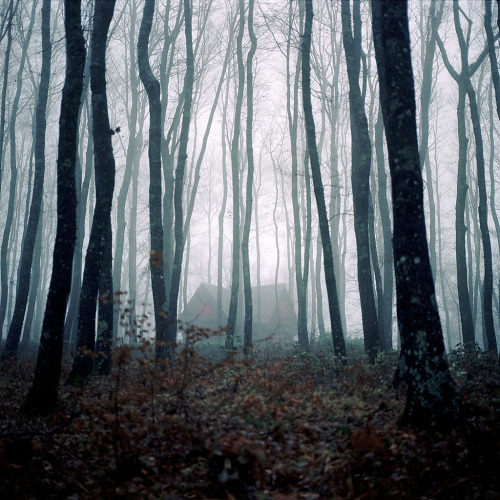 mykindafairytalee: by Davide Salvi