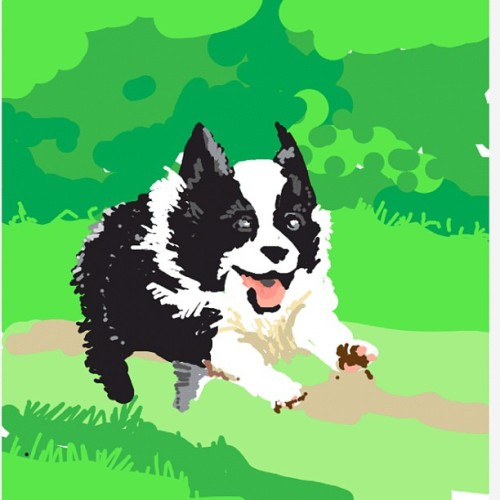 whistlebinky:  #whistlebinky #drawsomething #bestofdrawsomething #puppy #dog #bordercollie (Taken with Instagram)