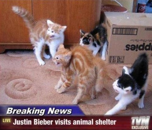 catasters:  Breaking News!!!
