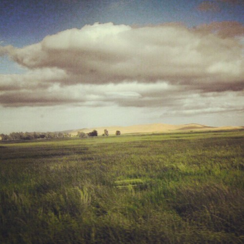 Iwasscreaminrunforrest    #amtrak (Taken with Instagram)