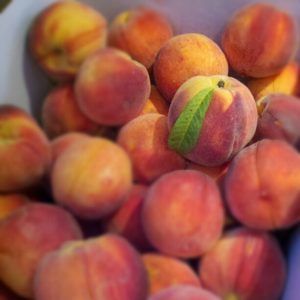 Oh yes, I certainly will have peach pies @Smorgasburg tomorrow. Use your noggin, don't miss em! #nofilter #pah (Taken with Instagram)