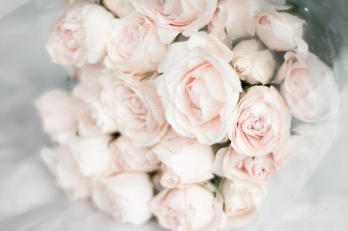 in love with pink roses….