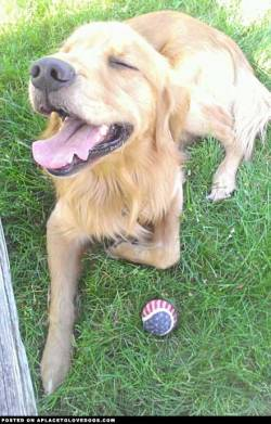 Submitted by Ashlyn R: This is my dog Merlin. Today we went to the park and played fetch. After a couple good tosses he decided he was tired so he laid down in the grass. He made this face as a breeze came by.