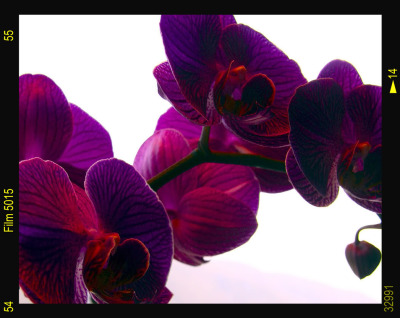 Ingredient Spotlight: Orchid Flower Be in full bloom. We love Art Décoratif Hydrating Lipstick.