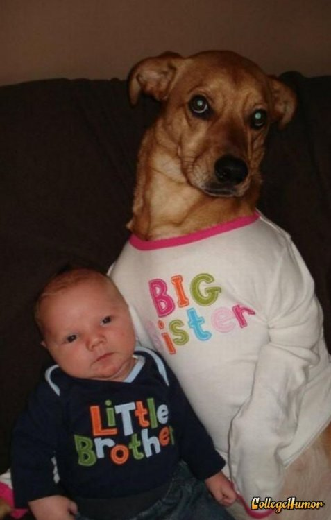 collegehumor:  Dog Wears Big Sister Shirt I can see the resemblance.