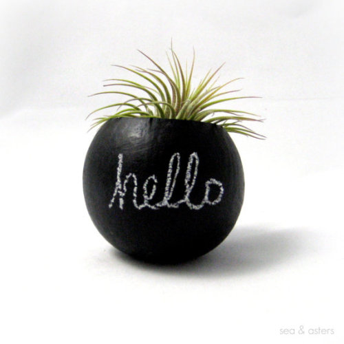 air plant pod by Sea & Asters