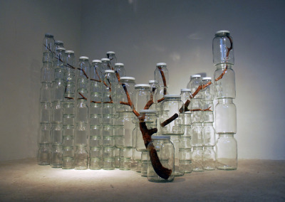 Amazing! tree parts in jars