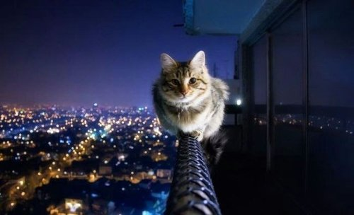 I dare u..#cat #funny #city #night #animals (from @JKDmitry on Streamzoo)