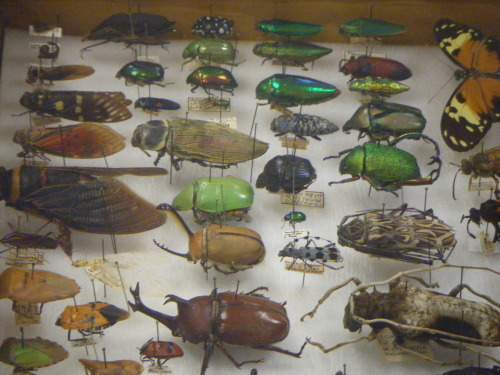 Some of our bugs.