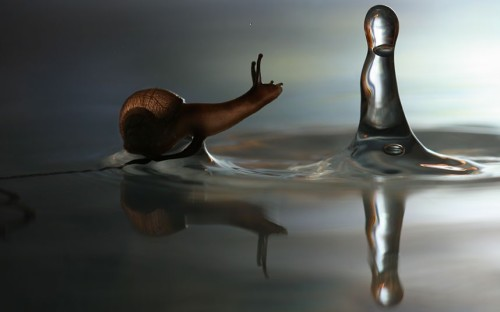 theanimalblog:  This snail may look like he is walking on water, but the surface tension of the puddle is just strong enough to support his weight. Picture: Vadim Trunov / Barcroft Media