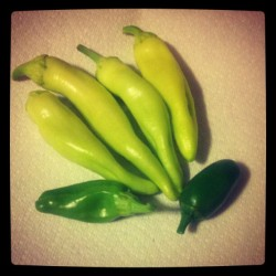 my first harvest of #peppers: anaheim, jalapeno & banana. gonna pickle them together for sandwiches  (Taken with Instagram)
