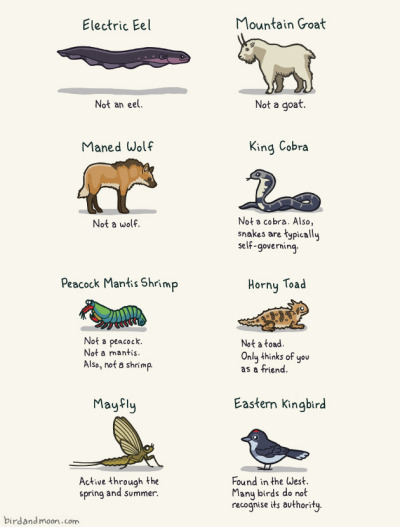 (via Tastefully Offensive: Animals with Misleading Names)